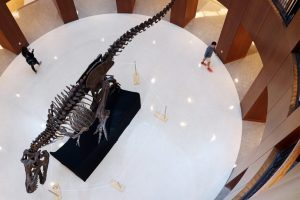 "Photograph of ""Bucky"" the T.rex in the Rotunda of College of Charleston Addlestone Library"